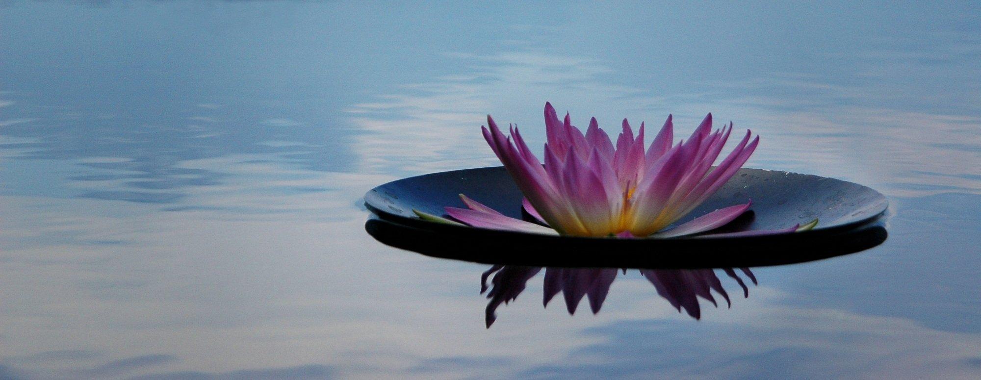 Meditation Makes Sense - The Live Sessions
